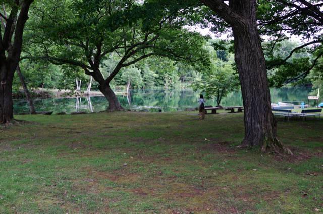 エメラルドグリーンの鳥沼公園の沼