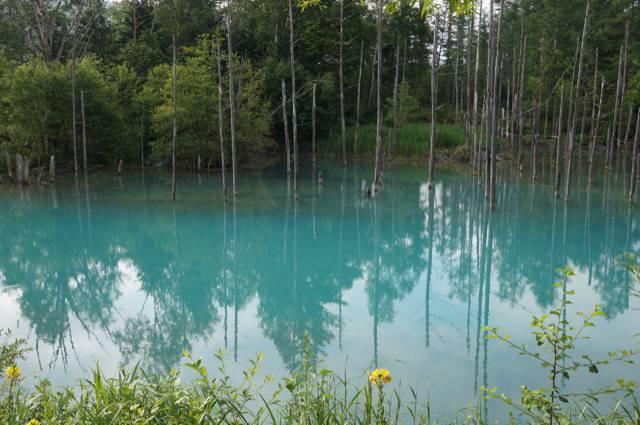 コバルトブルーの青い池