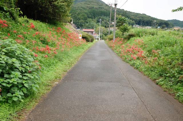 巾着田への道のり