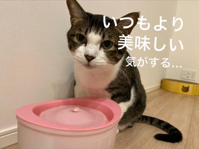 猫の自動給水器