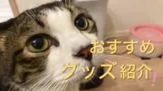 猫グッズおすすめ