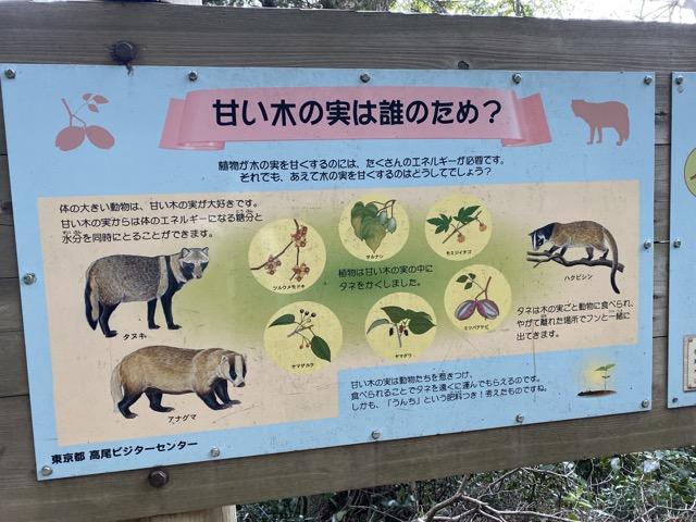 高尾山の動物